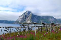 Hamnøy i Lofoten