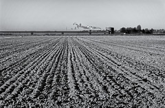 What's All This Talk About The Salt Of The Earth? All I See Is Dark Lines Of Mud! (Alfred Grupstra) Tags: agriculture field farm ruralscene nature plowedfield land inarow dirt plant outdoors growth landscaped season nopeople cultivated crop industry landscape blackandwhite lines