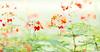Like a Chinese Painting, re-edit (Pexpix) Tags: dof bokeh singapore wideopen plant nikkor10514e botanicalgardens flower sg 攝影發燒友