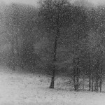 With a 300mm in the woods while snowing thumbnail