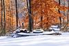 Frozen Firepit (redhorse5.0) Tags: firepit fallleaves fallleavesinthesnow backyard winterlandscape redhorse50 sonya850