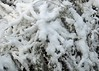 11Dec17 Snowy Branches (Daisy Waring World) Tags: snow snowybranches