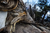 Tree Trunk Boiz (Alec (Rebel T3i)) Tags: big bear bigbear california canon rebel rebelt3i canonphotography lake water cloud lightroom photoshop photography