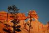 Tree-mendous Red Rocks (murraymike89410) Tags: brycecanyon np utah moon tmt
