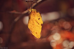 #autumn_photography #macro_photography #macro #photography #photographyoftheday #photo_art #autumn #yellow #closeshot #nature_photography (salam.jana) Tags: autumnphotography macrophotography macro photography photographyoftheday photoart autumn yellow closeshot naturephotography