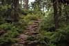 The way (Xtraphoto) Tags: bavaria bayerischerwald forest wald gebirgsweg weg wege way