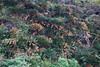 DSC03333 (tokuhisahiroki) Tags: 奄美大島 amamioshima