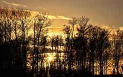 December sunset (vibeke2620) Tags: solnedgang træer himmel december denmark nikond3300 landskab skumring skov goldensky goldenclouds gylden silhouette blackandgold winterlandscape vinterlandskab