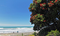 Kiwi summer..... (flying-leap) Tags: canon 60d summer 4summer the4seasons canterbury nz tamron pohutukawa wide bay