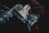 rainy days   l   2018 (weddelbrooklyn) Tags: hund hunde haustier haustiere tier tiere zuhause fensterlicht drinnen kopfbedeckung decke dog dogs animal animals pet pets home inside availablelight headgear blanket nikon d5200 35mm