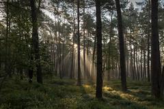 Sonne+Nebel 02 (Matthias Busse) Tags: sonne nebel sonnenaufgang eos 6d mark2 ef2470mm gegenlicht