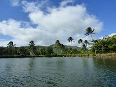 Wailua River State Park - Fern Grotto (67) (pensivelaw1) Tags: hawaii kauai wailuariverstatepark ferngrotto