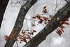 Howling winds (cheryl.rose83) Tags: snowstorm snow trees winter january bombcyclone newengland massachusetts bombogenesis