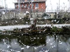 La prima neve da un punto di vista diverso. Milano (diegoavanzi) Tags: milano milan italia italy lombardia lombardy sony hx300 bridge naviglio naviglilombardi neve martesana canal snow ragnatela spiderweb