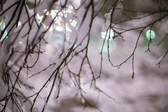 Winter branches (eirikj) Tags: winter landscape snow fyllingsdalen bergen hordaland norway canon eos 6d olympus 50mm 12 week50challenge