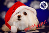 21417 - Buone feste (Diego Rosato) Tags: kira cani animali dogs pets animals merry christmas xmas happy new year buone feste natale anno nuovo nikon d700 85mm rawtherapee gimp