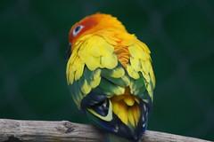Bunter Vogel (Jasardpu) Tags: zoo karlsruhe bunt tier vogel animal bird