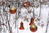 fun with red bulbs (TAC.Photography) Tags: bulbs ornaments branch decoration christmas winter cold outdoors berries red gold redandgold redbulbs tomclarkphotographycom tomclark tacphotography d7100