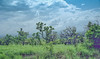 Ethiopia : Kibish, homeland of the Surma #2 (foto_morgana) Tags: africa afrika afrique analogphotography analogefotografie anthropology bush ethiopia ethiopië ethnic ethnicity ethnie etnia etniciteit kibish kodakportra160vc landscape native nikoncoolscan omovallei omovalley panoramic photographieanalogue scenic suri surma travelexperience tribal tribes vallebajodelomo valléedelomo vuescan