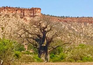 Zimbabwe Cape Buffalo Hunt 4