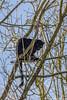 Panthère noire (christophegirardberthet) Tags: nature panthère noire black panther