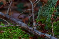 Before the Snow (jonaskey) Tags: moss mossy lichen twig buds stick macro