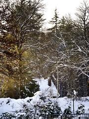 Snow Forest /\ (Trang |C-Cat|) Tags: house huis light licht forest bos netherlands nederland neighbor snow sneuw trees boemen yellow white winter gelderland veluwe veluwse 2017 nikon nikond3300 105mm morning hoogsoeren chimney europe european europa beech