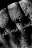 About flesh and bone... (Shadows Of The Sun) Tags: canon closeup macro monochrome bw blackandwhite blancoynegro byn skull dead teeth bones flesh shadowsofthesunphotography