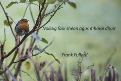 Happy Christmas (Frank Fullard) Tags: frankfullard fullard christmas xmas card wish greeting nollaig noel festive season irish ireland