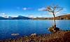 Milarrochy Bay Tree. (billmac_sco) Tags: scotland lochlomond millarochy bay trees water mountains scenic