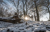 Winter (FireDevilPhoto) Tags: winter snow tree nature forest coldtemperature frost outdoors landscape ice season frozen christmas weather branch scenics woodland lightnaturalphenomenon white nopeople everypixel
