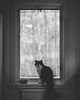 20180101_365_KDW001 (KrisWould) Tags: 365 50mm animal art cat cute d750 daily everyday floof fluff home indoor kitchen kitten kitty niftyfifty nikon pet photoaday project sigma window