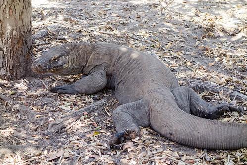 95-Labuan Bajo e Islas de Komodo (107)