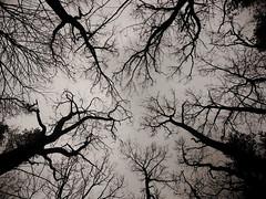 tree horror (Darek Drapala) Tags: horror trees tree forest fogg bw blackwhite blackandwhite nature panasonic poland polska panasonicg5 sky skyskape lumix light olszynka
