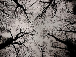 tree horror