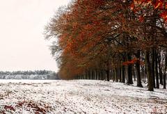 When winter meets autumn (nldazuu.com) Tags: sneeuw schnee bomen winter oudreemst oudreemsterlaan winter2017 natuurmonumenten laan bos december snow