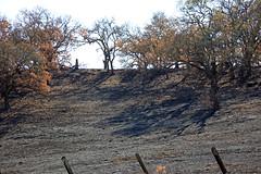 Fire Damage (JB by the Sea) Tags: sonoma sonomacounty california winecountry sonomavalley november2017