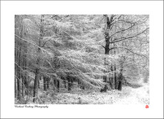 Winter Coat (Chalky666) Tags: tree trees wood woodland forest snow winter southdowns westsussex landscape art mono