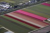 Holland - Flower Fields from the air (Rolandito.) Tags: europe nederland netherlands niederlande holland paysbas aerial tulup flower field fields