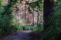 Bamboo + Redwood (Leightino) Tags: search results vandusen botanical garden bamboo redwood