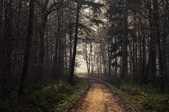 Eifel Paths (Netsrak) Tags: baum eifel europa europe herbst landschaft natur nebel wald autumn fall fog landscape mist nature woods bäume