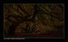 Dunkelkammer / darkroom (H. Roebke) Tags: dunkelkammer canon1635mmf28lisiii de landscape landschaft nature germany rural wald natur tree forrest instagram darkroom 2017 baum farbe longexposure foliage contrast autumn süntelbuche color niedersachsen canon7dmkii lightroom herbst
