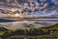 大崙山觀光茶園 (張麗芬) Tags: taiwan 南投縣 鹿谷鄉 大崙山 茶園 雲海 夕陽 竹子 光影 風景