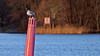 Pinnpippi (Franz Airiman) Tags: mås fiskmås gull seagull pole pinne påle märke sjörmärke babordsmärke portmarker sea sjö bay fjärd isbladsviken isbladbay fågel pippi birdie birdy sjöfågel seabird stockholm sweden scandinavia prick