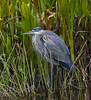 12-30-17-7410 (Lake Worth) Tags: animal animals bird birds birdwatcher everglades southflorida feathers florida nature outdoor outdoors waterbirds wetlands wildlife wings