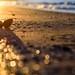 Beach Morning Treasure