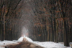 The path to X-Mas (nldazuu.com) Tags: sneeuw schnee bomen winter oudreemst oudreemsterlaan winter2017 natuurmonumenten laan bos december snow