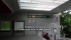 Singapore mangroves, a few steps from an MRT station! (wildsingapore) Tags: berlayar creek island singapore marine coastal intertidal shore seashore marinelife nature wildlife underwater wildsingapore