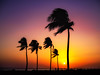 sunset_palm; salalah_oman (eks-i zîbâ) Tags: sun sunset palm tree sky arabic arabian sea ocean indian oman salalah asia colorful horizon shine windy clear beach long endless