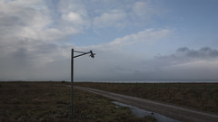 The Lamp 00 (Walter Johannesen) Tags: lampe lys gadelampe mark field lamp light street lampen licht strasenlampen